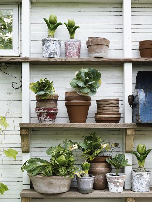 Ogród fit zioła