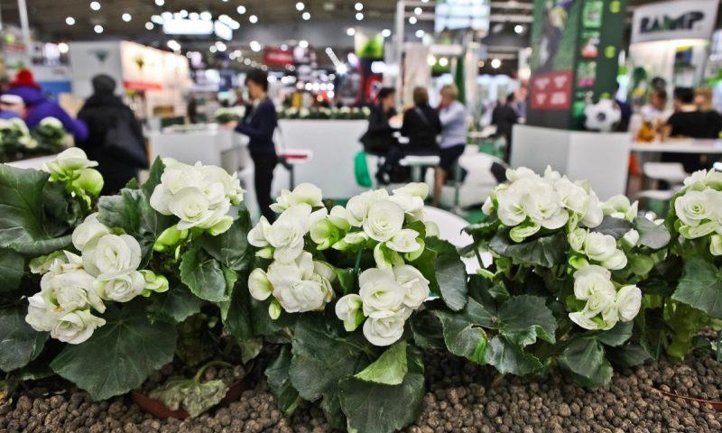 fot. Gardenia