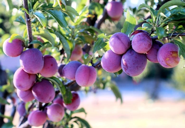 Owocowy smak lata