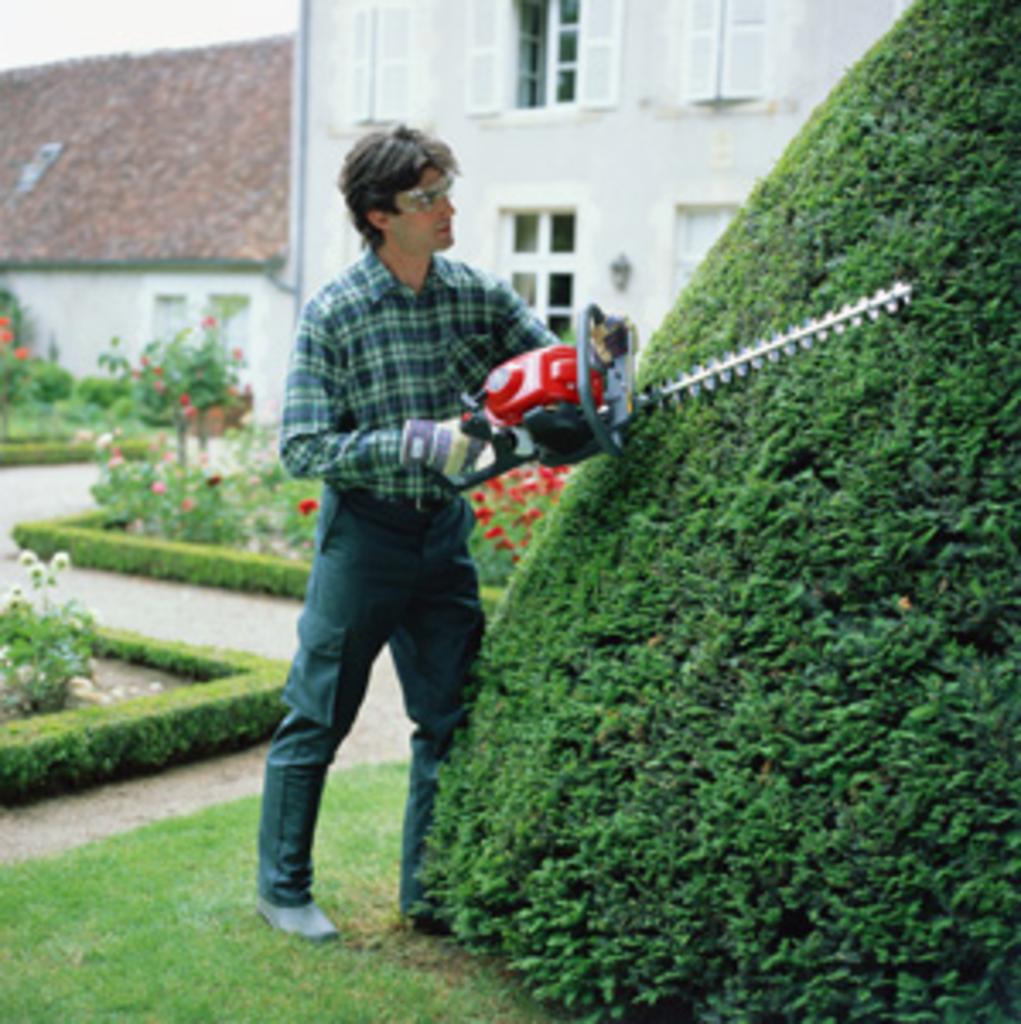 Pielęgnacja krzewów i żywopłotów w okresie letnim